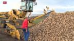 Video «Bitteres Jahr für Zuckerbauern» abspielen