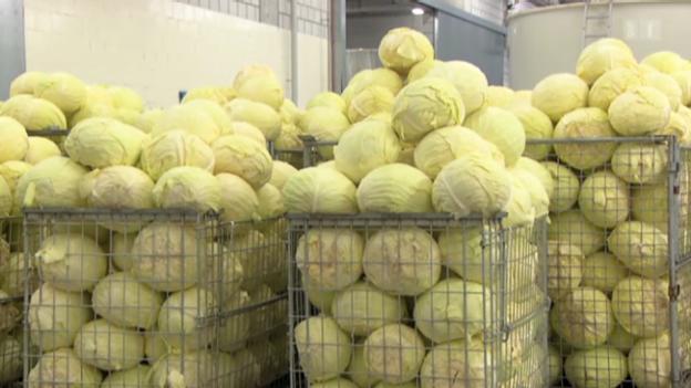 Video «Aus Weisskohl wird Sauerkraut: Milchsäurebakterien als Helfer» abspielen