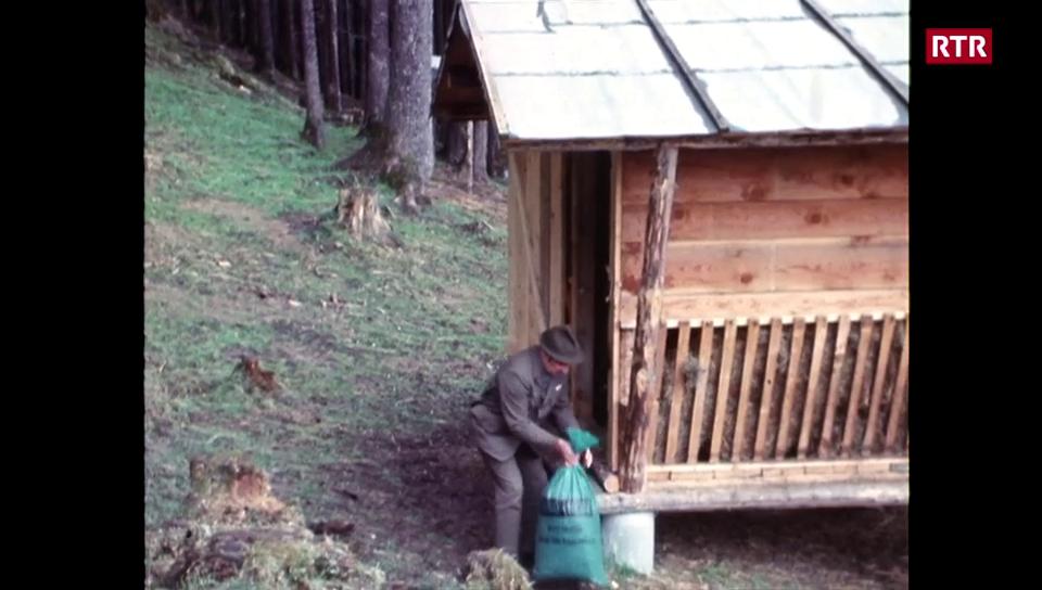 Pavlar la selvaschina per evitar grondas sperditas durant envierns crivs