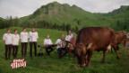 Video «Einspieler Schmidigs Kühe» abspielen