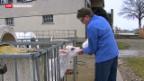 Video «Verbandspitze der Milchproduzenten tritt ab» abspielen