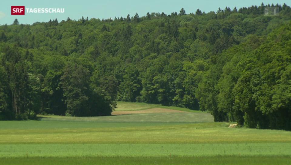 Schweizer Wäldern geht es gut