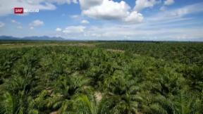 Video «Kampf gegen mehr Palmöl-Importe» abspielen