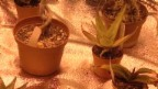 Video «Kiffen ohne Strafe» abspielen