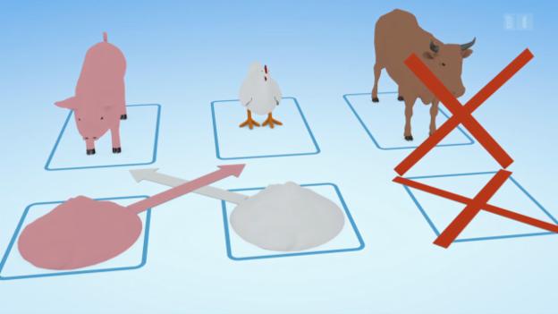 Video «Tiermehl: So wird Kannibalismus vorgebeugt (Teil 2)» abspielen