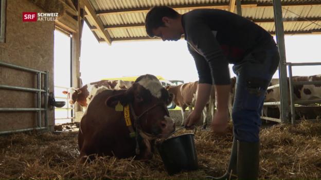 Video «63 tote Kühe wegen Botox-Vergiftung» abspielen