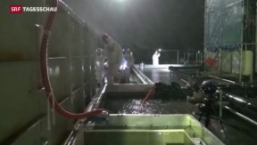 Video «IAEA-Team besucht Fukushima» abspielen