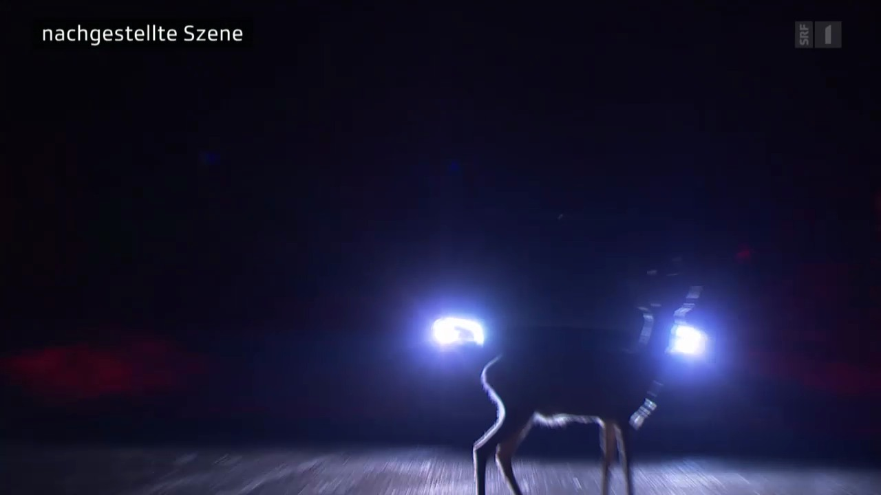Reh springt vors Auto: Behörden büssen gnadenlos