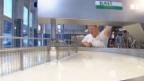 Video «Eigermilch: Der Bauer als Käser» abspielen