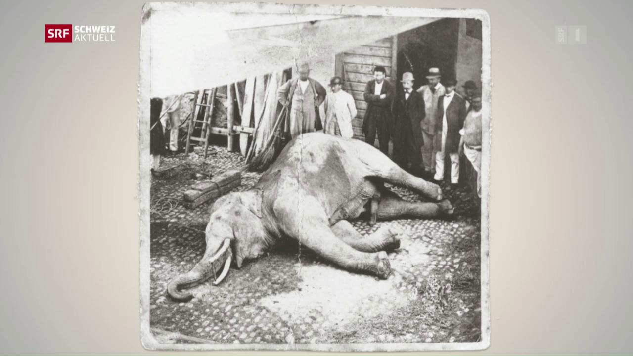Mythos um einen Elefanten