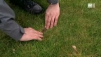 Video «Woher kommt der Rasen?» abspielen