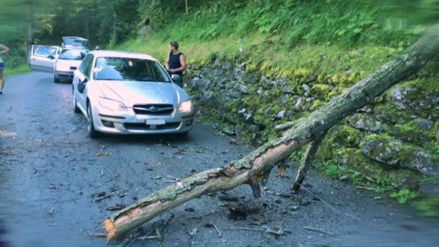 Video «Baum fällt auf fahrendes Auto: Lenker muss blechen» abspielen
