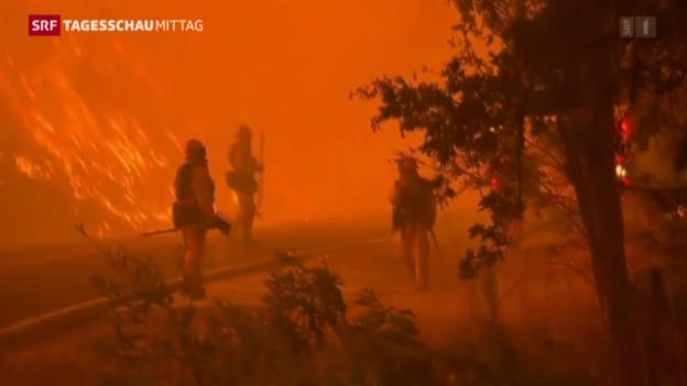 Video «Tausende fliehen vor Waldbränden» abspielen