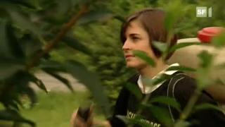 Video ««Einstein» jagt die Tigermücke» abspielen
