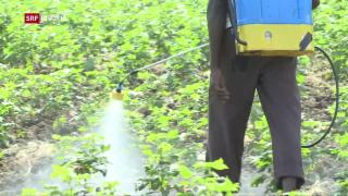 Video «Vergiftungsgefahr in Indien» abspielen