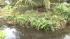 Video «Palmöl: Zeitbombe im Schlamm» abspielen