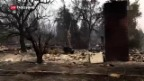 Video «Tote bei Waldbränden in Kalifornien» abspielen