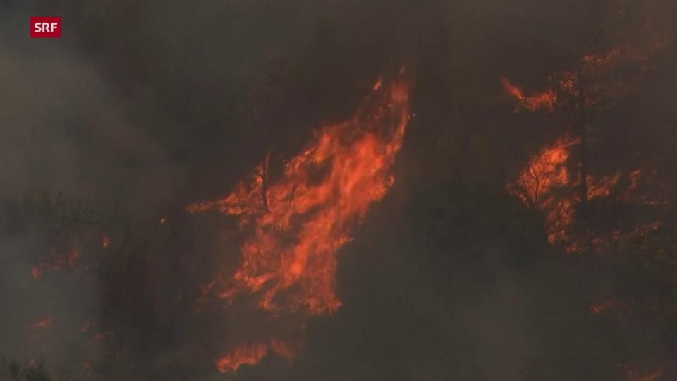 Einsatzkräfte und Private kämpfen gegen Waldbrände in Israel