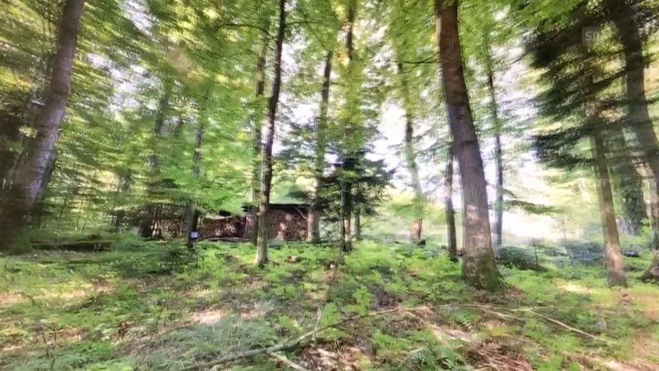 Der digitale Wald