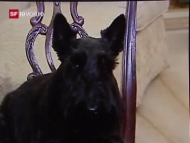 Der mächtigste Hund der Welt