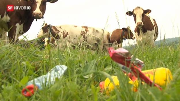 Video «Der Müllberg in der Kuh» abspielen