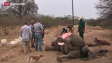 Video «Kampf dem illegalen Wildtierhandel» abspielen