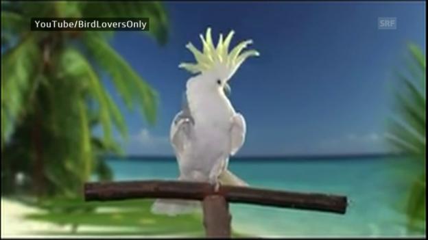 Video «Tanzende Tiere» abspielen