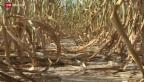 Video «Ungebremster Klimawandel» abspielen