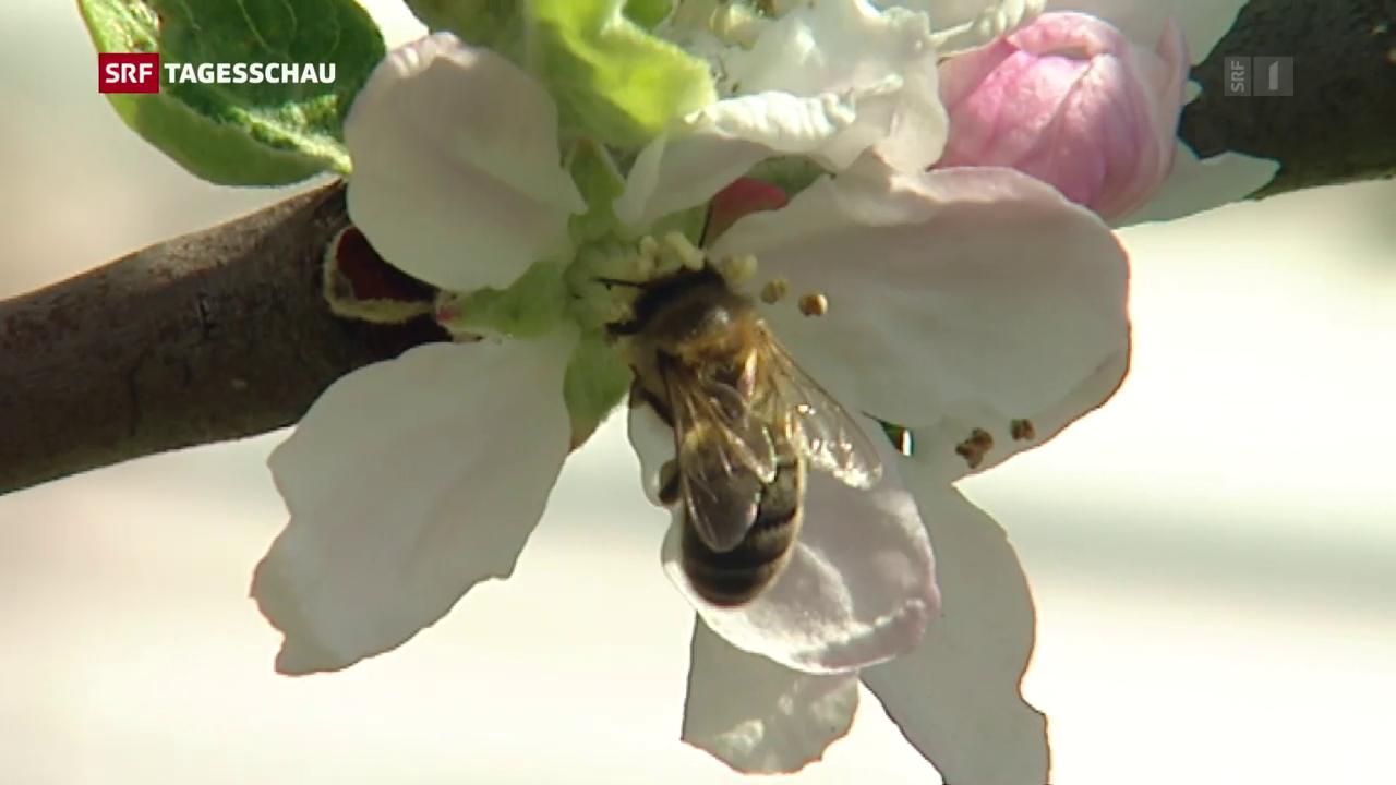 Insektizid im Bienenhonig