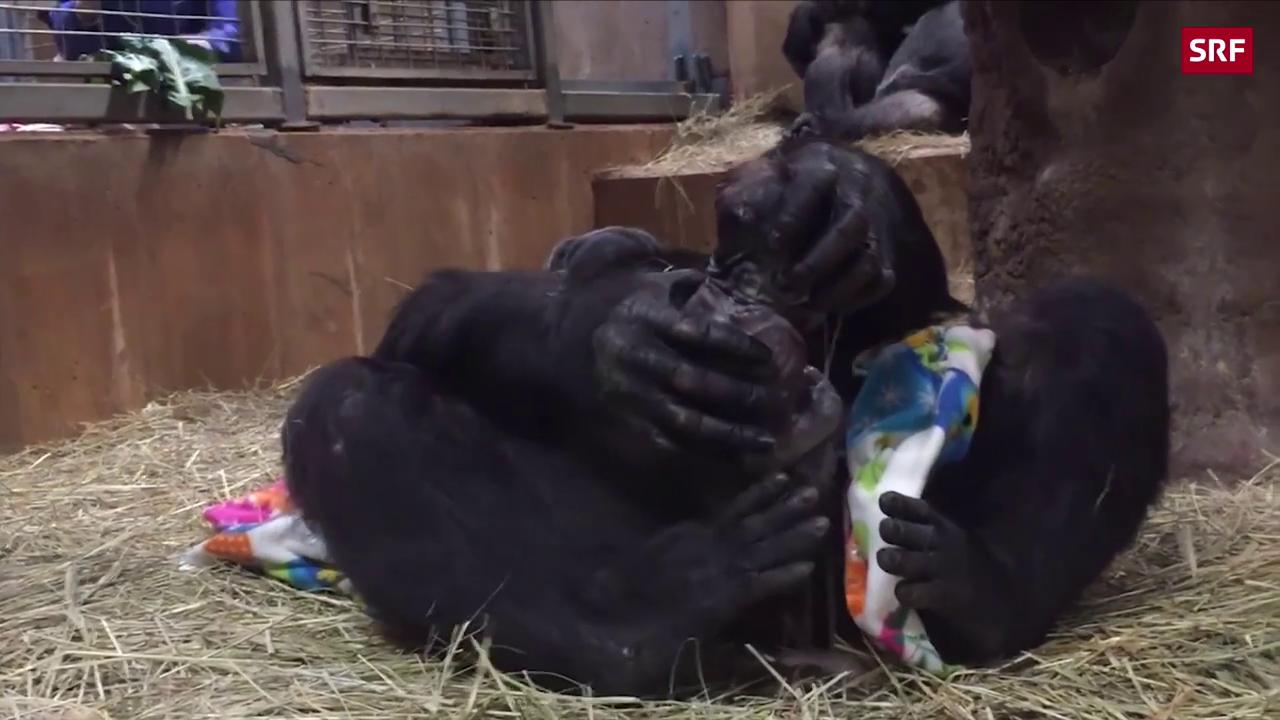Hier kommt ein Gorilla-Baby zur Welt