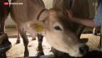 Video «Immer weniger Milchbauern in der Schweiz» abspielen