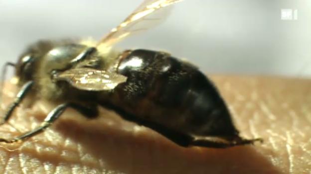 Video «Sendung vom 30. September 2010» abspielen