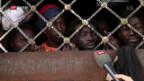 Video «FOKUS: Eine halbe Million Menschen sitzen in Libyen fest» abspielen