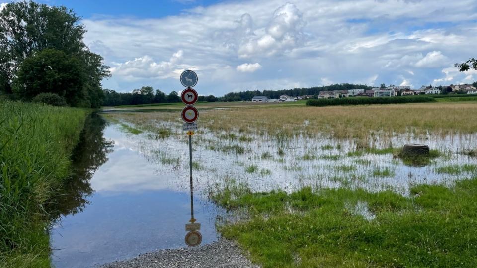 Nach dem Regen die Mücken: Stehendes Wasser ist ein Paradies für die stechenden Tiere