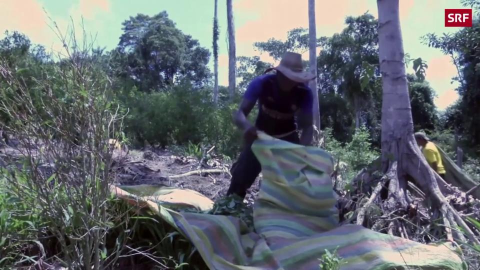 Archiv: Bereits 2017 boomte die Kokain-Produktion in Kolumbien