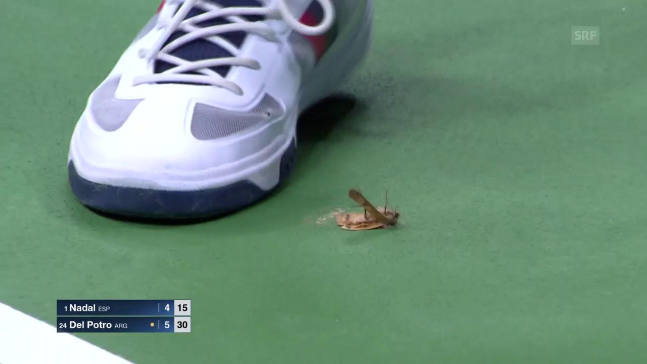 Der Balljunge kennt kein Erbarmen mit dem Insekt