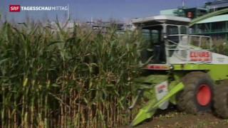 Video «China übernimmt Syngenta » abspielen