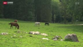 Video «Grenzfall Jura » abspielen