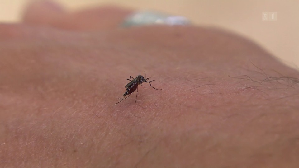 Nach Mücken schlagen hilft