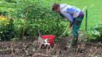 Video «Findus «hilft» Brigitte im Garten» abspielen