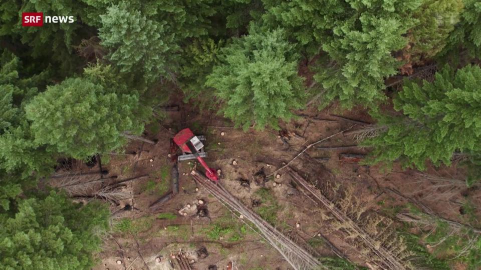 Waldindustrie in den USA