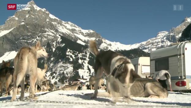 Video «Schweiz aktuell vom 13.02.2014» abspielen