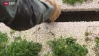 Video «Grüne Wände auch in der Schweiz» abspielen