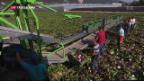 Video «Altersvorsorge 2020 beschäftigt den Bauernverband» abspielen