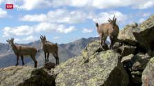 Video «Trailer: Biosfera Val Müstair» abspielen