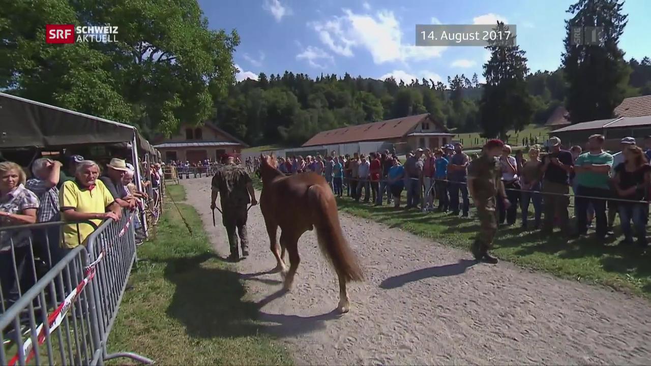 Infizierte Pferde versteigert