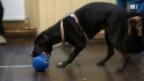 Video «Hunde klüger als gedacht» abspielen