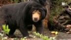 Video «Neue Serie: Der Zootierarzt» abspielen