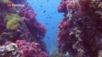 Video «Hawaii verbietet Sonnencreme» abspielen