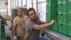 Video «FOKUS: Bundesrat hält an Ventilklausel fest» abspielen